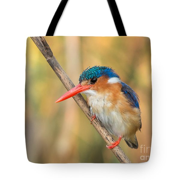 Tote Bag featuring the photograph Malachite Kingfisher - Martin-pecheur Huppe - Corythornis Cristatus by Nature and Wildlife Photography