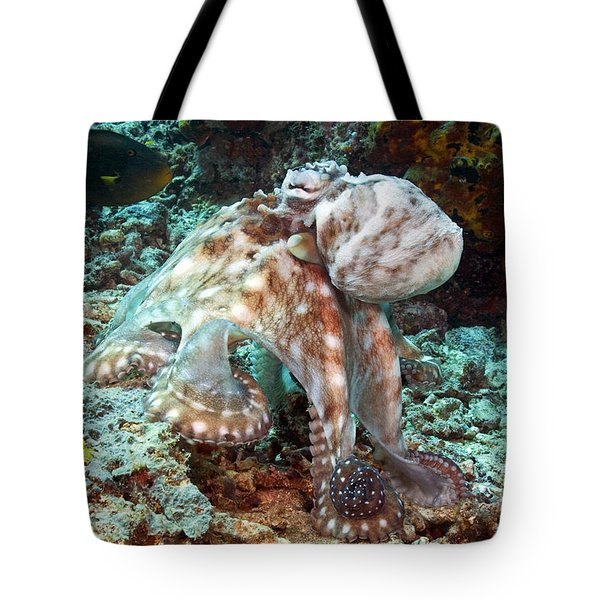 Malaysia, Octopus Tote Bag by Dave Fleetham - Printscapes
