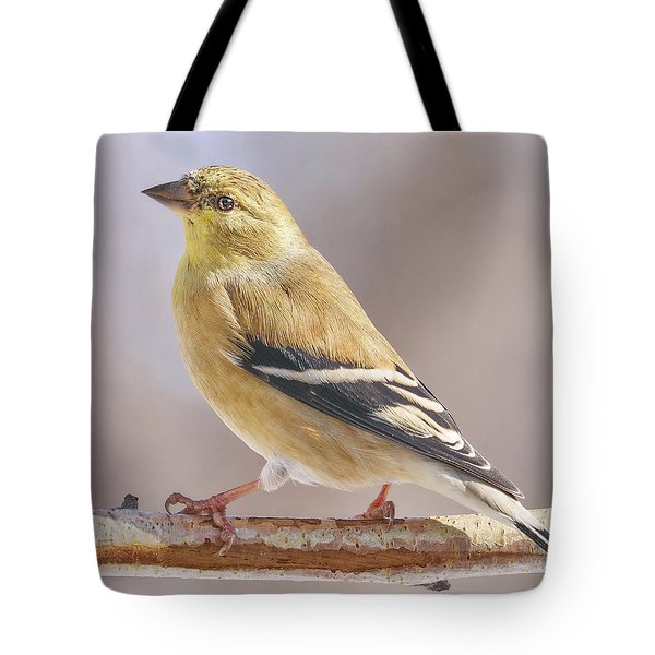 Male American Goldfinch In Winter Tote Bag by Jim Hughes