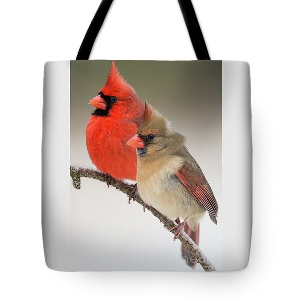Male And Female Northern Cardinals On Pine Branch Tote Bag