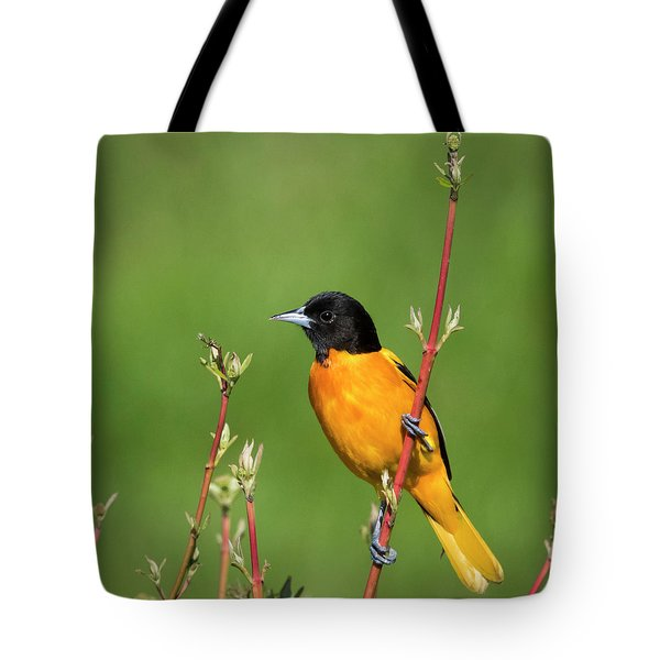 Male Baltimore Oriole Posing Tote Bag