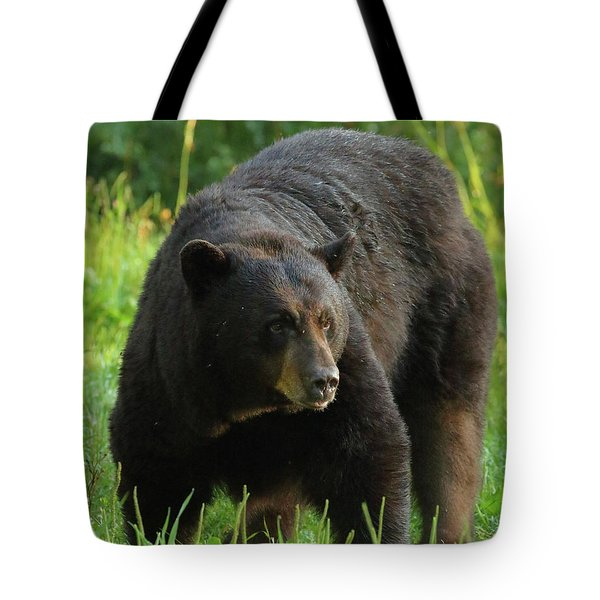 Tote Bag featuring the photograph Male Black Bear In Late Light by Coby Cooper