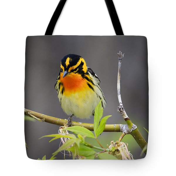 Male Blackburnian Warbler Tote Bag by Gary Hall
