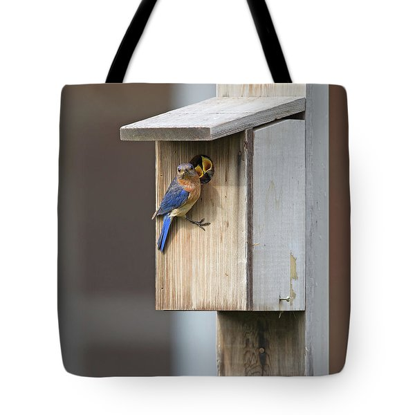 Male Bluebird And Babies Tote Bag