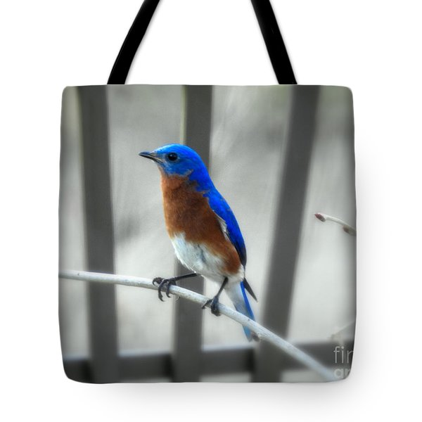 Tote Bag featuring the photograph Male Bluebird by Brenda Bostic