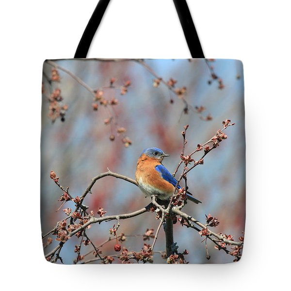 Male Bluebird Tote Bag