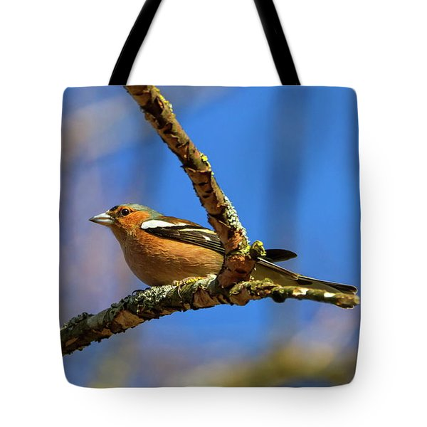 Male Common Chaffinch Bird, Fringilla Coelebs Tote Bag by Elenarts - Elena Duvernay photo