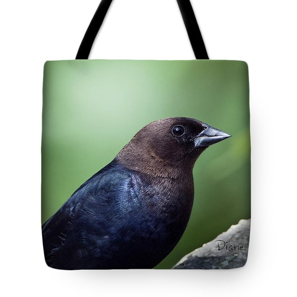 Male Cowbird Tote Bag by Diane Giurco