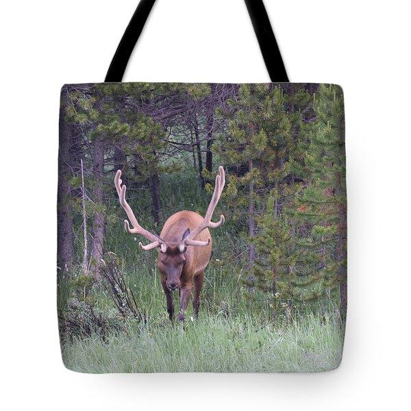 Bull Elk Rmnp Co Tote Bag