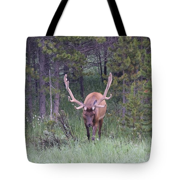 Tote Bag featuring the photograph Bull Elk Rmnp Co by Margarethe Binkley