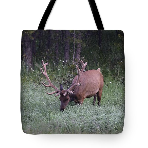 Bull Elk Rocky Mountain Np Co Tote Bag