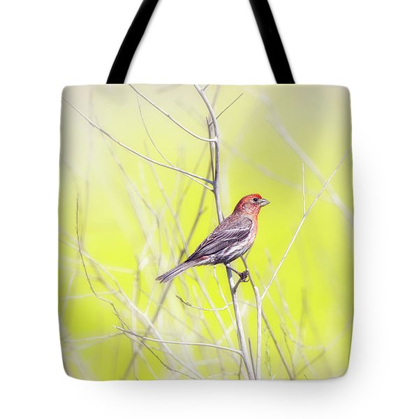 Male Finch On Bare Branch Tote Bag