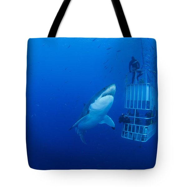 Male Great White With Cage, Guadalupe Tote Bag by Todd Winner