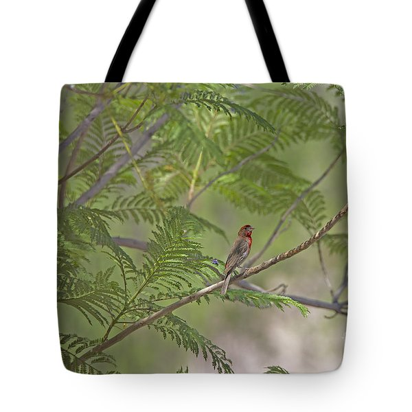 Male House Finch Tote Bag by Anne Rodkin