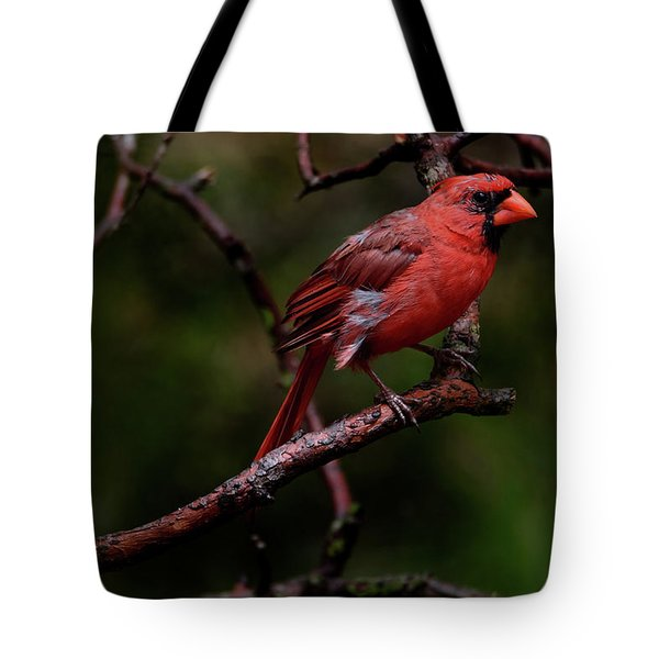 Male Northern Cardinal Tote Bag
