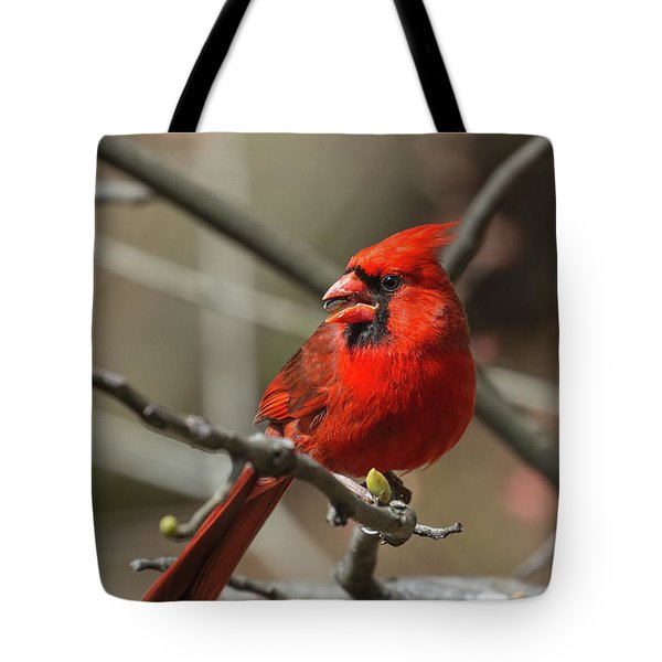 Male Northern Cardinal In Spring Tote Bag