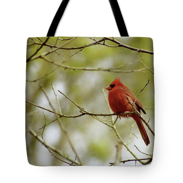 Male Northern Cardinal Tote Bag by Michael Peychich