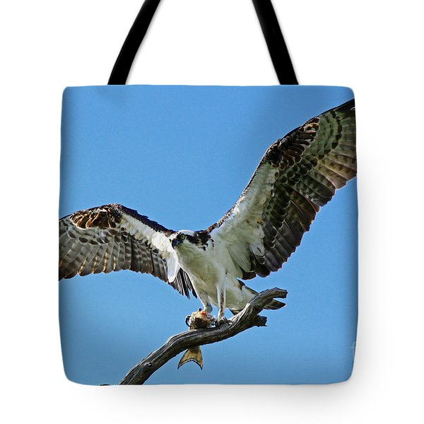 Male Osprey Tote Bag by Larry Nieland