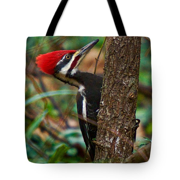Male Pileated Woodpecker Tote Bag by Robert L Jackson