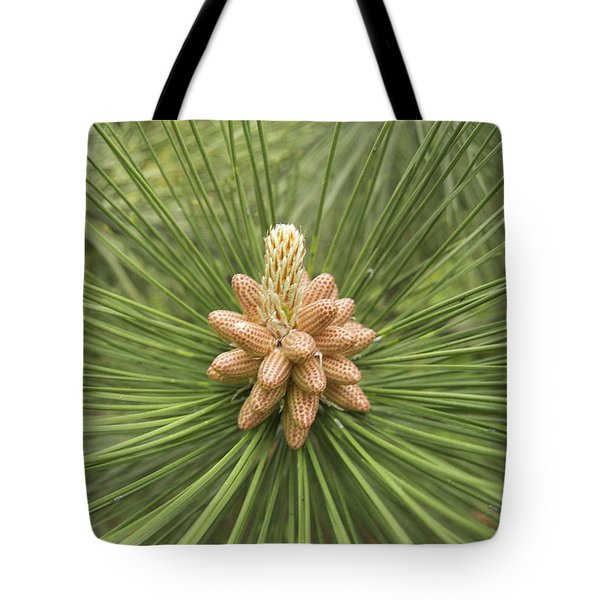 Male Pine Cones  Tote Bag by Michael Peychich