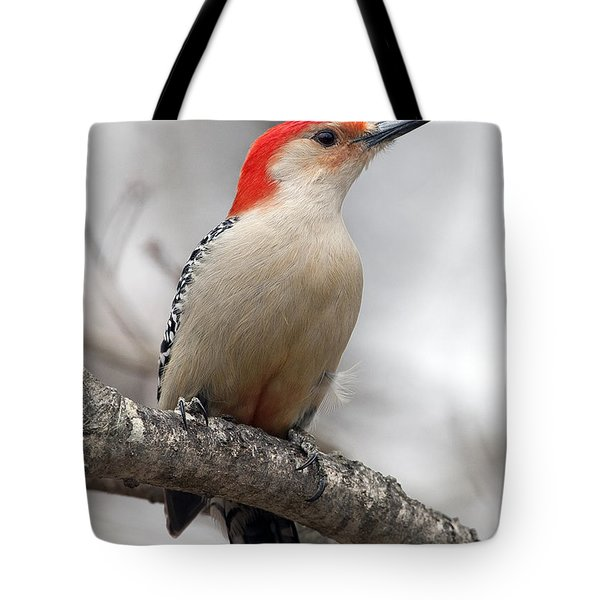 Male Red-bellied Woodpecker Tote Bag by Diane Giurco