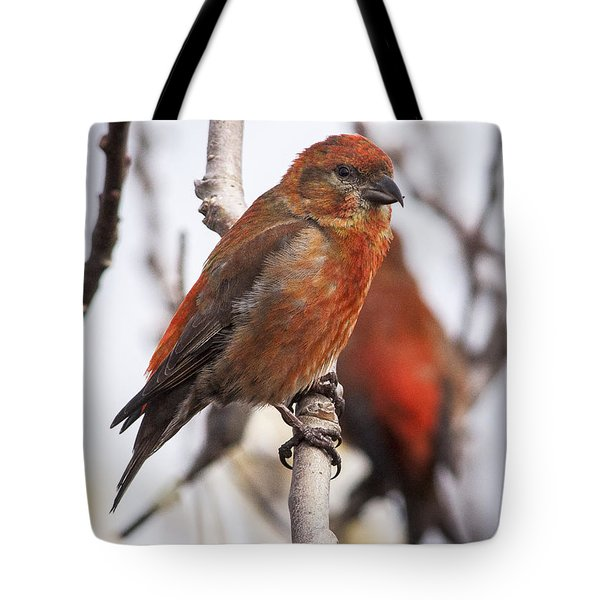 Male Red Crossbills Tote Bag by Robert Potts