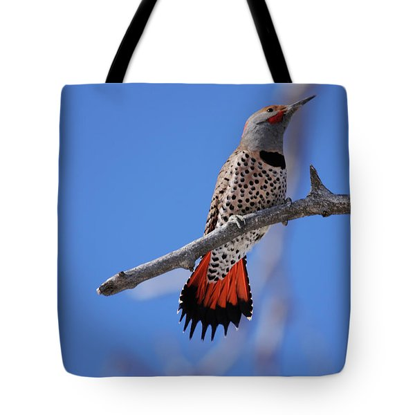 Male Red Shafted Northern Flicker Tote Bag