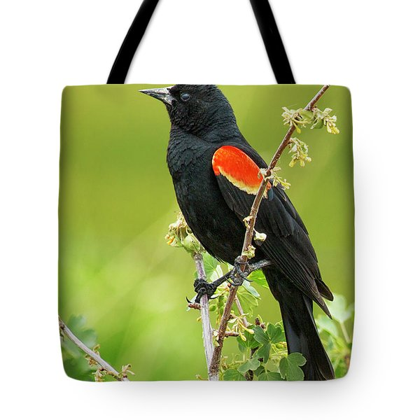 Male Red-winged Blackbird Tote Bag