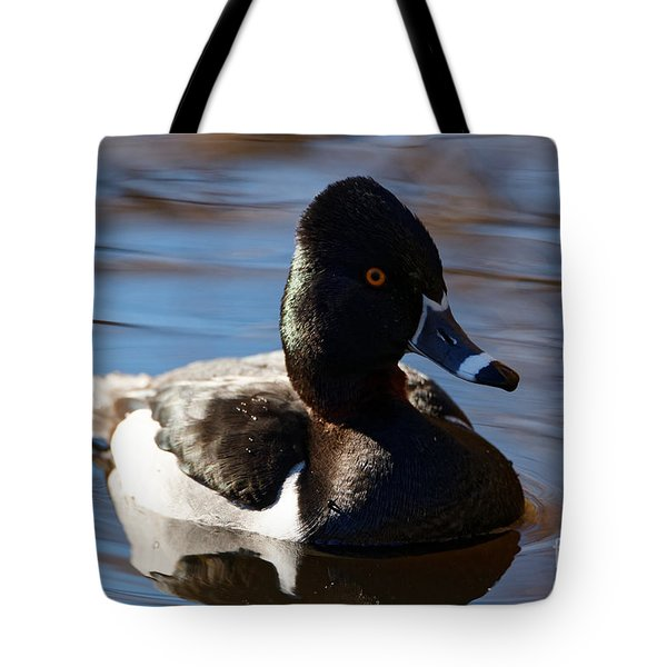 Male Ring-necked Duck Tote Bag