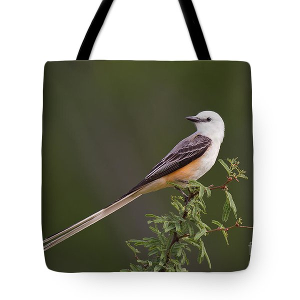 Tote Bag featuring the photograph Male Scissor-tail Flycatcher Tyrannus Forficatus Wild Texas by Dave Welling