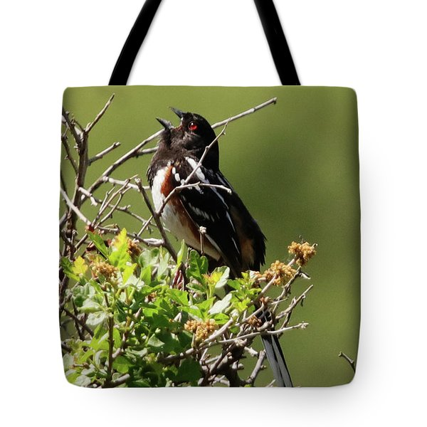 Male Spotted Towhee Tote Bag