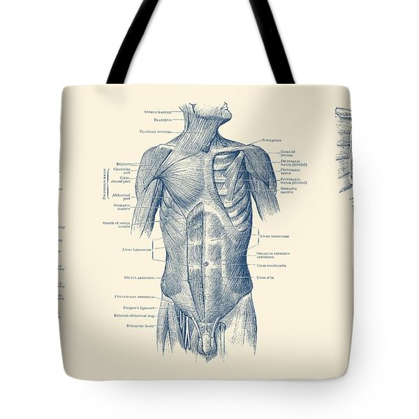 Male Upper Body Muscular System - Multi-view - Vintage Anatomy Tote Bag