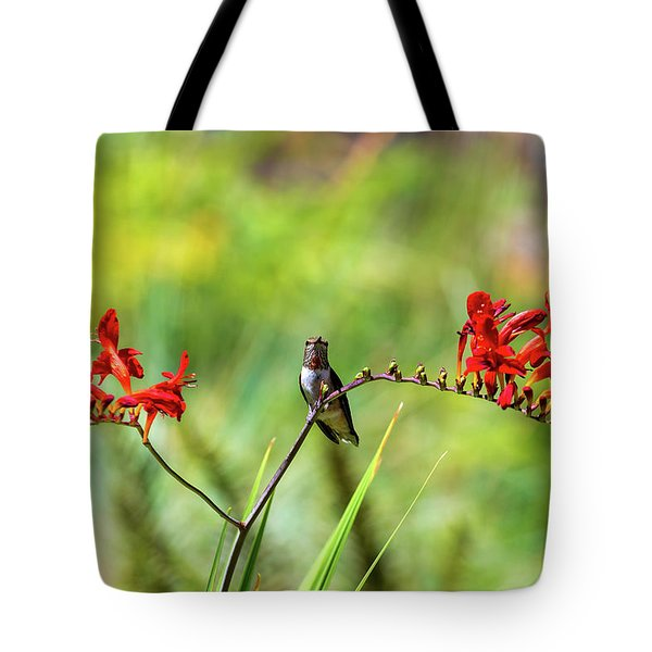Male Young Hummingbird Perched Tote Bag