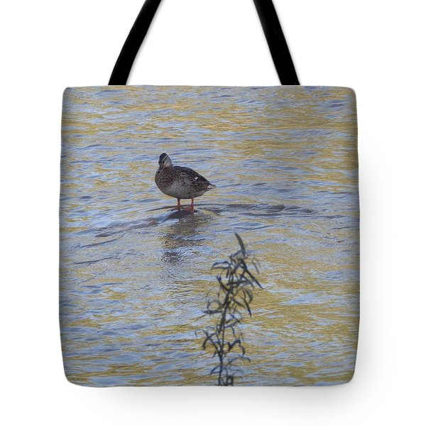 Mallard And The Branch Tote Bag
