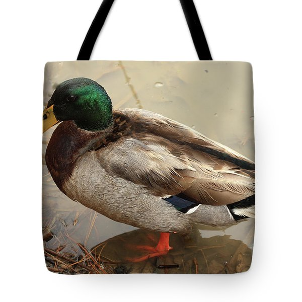 Tote Bag featuring the photograph Mallard Duck by Kim Henderson