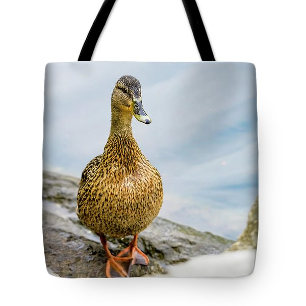 Tote Bag featuring the photograph Mallard  by Kathy King