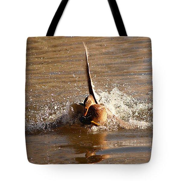 Mallard Mating Dance Tote Bag