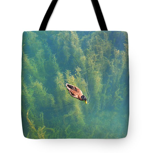 Tote Bag featuring the photograph Mallard Over Seaweed by SimplyCMB