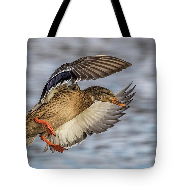 Mallard With Cupped Wings Tote Bag by Paul Freidlund