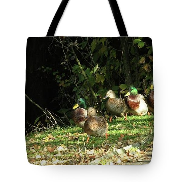 Mallards Walk Tote Bag