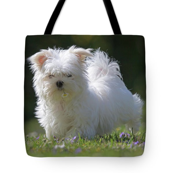Maltese And Daisy Tote Bag