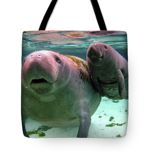 Manatee Mom And Calf Tote Bag
