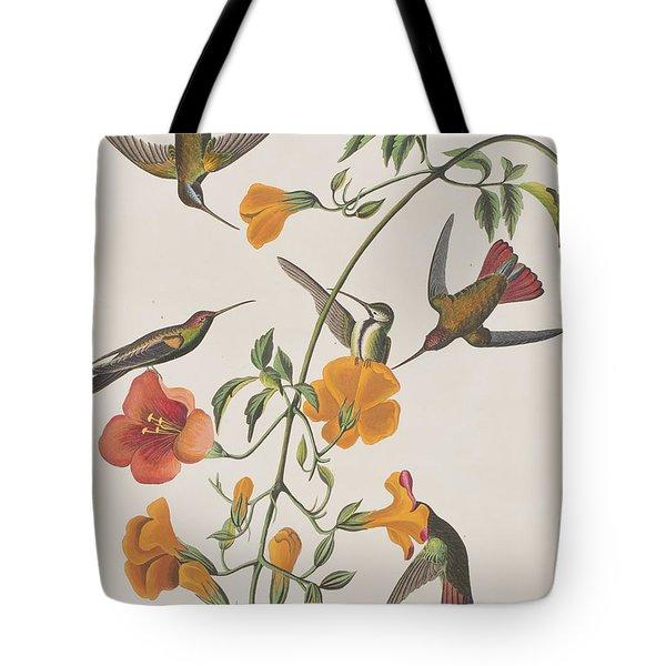 Mango Humming Bird Tote Bag by John James Audubon