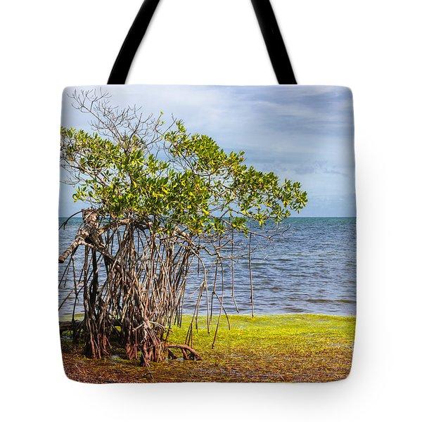 Mangrove At Florida Keys Tote Bag