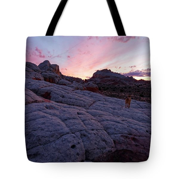 Man's Best Friend Sunset Tote Bag by Jonathan Davison
