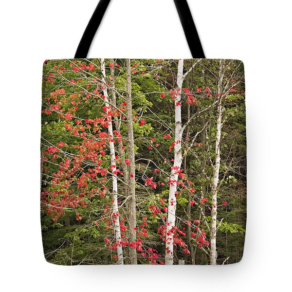 Maple Birch Tote Bag