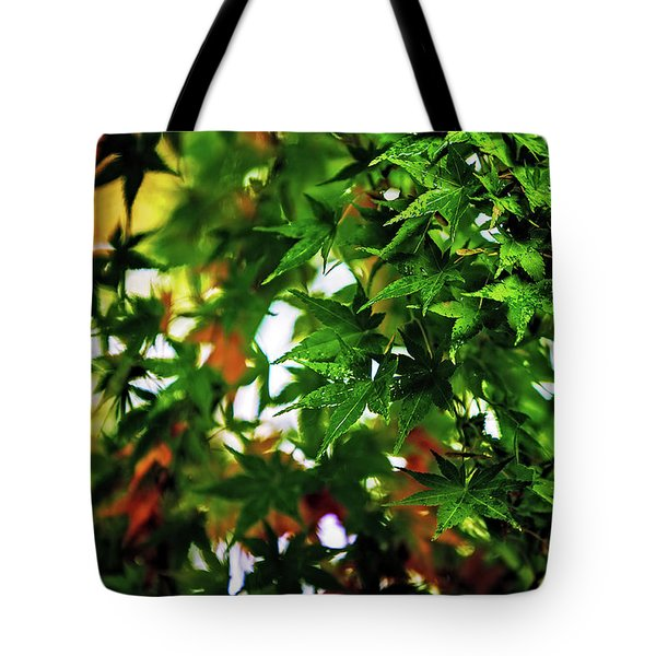 Maple In The Mist Tote Bag by Mark Lucey