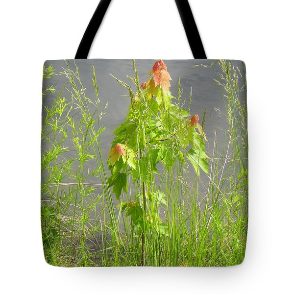 Maple On Lake Tote Bag by Craig Walters