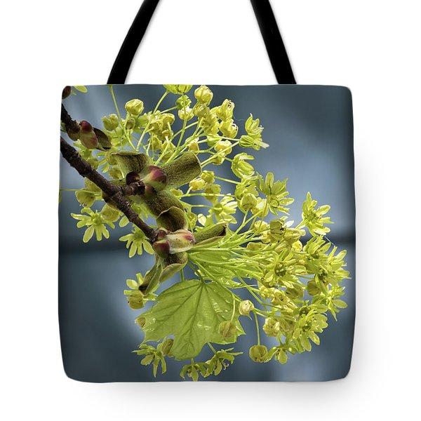 Maple Tree Flowers 2 - Tote Bag