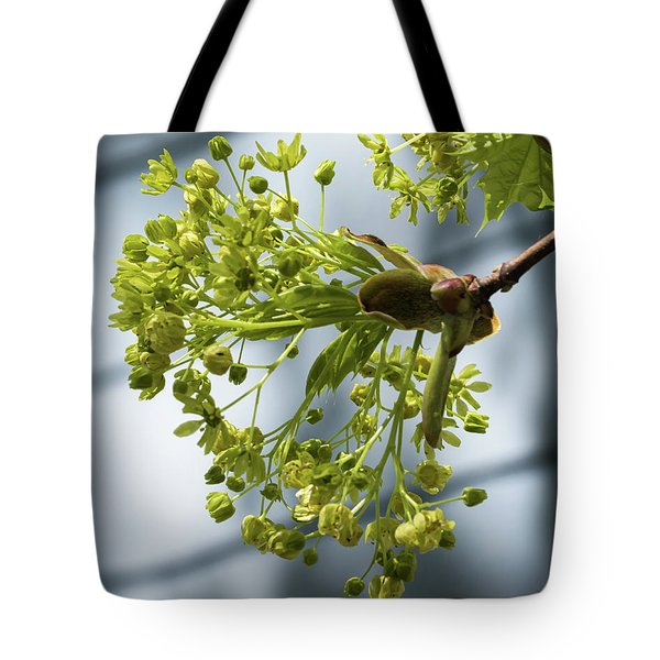 Maple Tree Flowers - Tote Bag